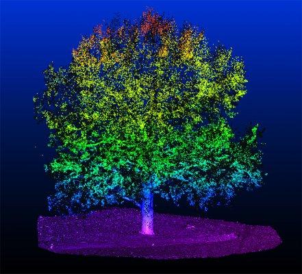 Baum_CoordZ2.jpg